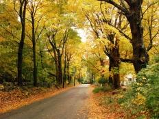 camino_en_bosque_amarillo_1024x768