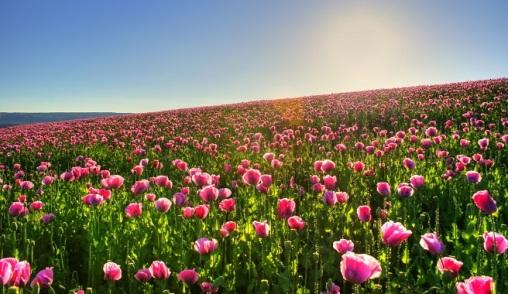 Como-distribuir-las-rosas-en-el-jardin