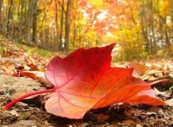 hoja-de-otoño.jpg.jpg