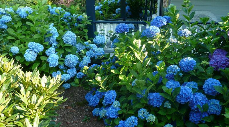 jardines-aptos-para-alergicos2