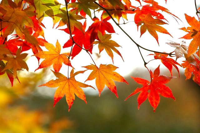 otoño.jpg.jpg