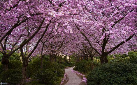 arboles-en-flor,-acera,-arbustos-174736