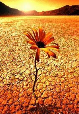 flor_desierto