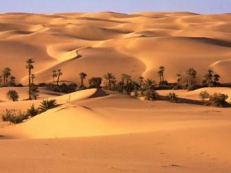 oasis_en_el_desierto