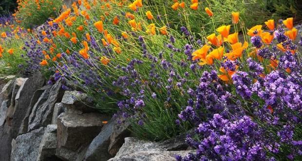 Plantas-para-Jardines-de-Roca-620x330