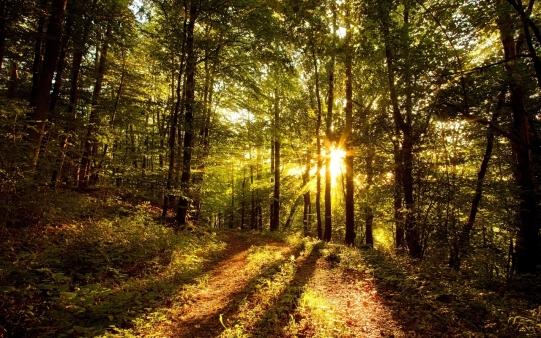 bosque-tranquilo-al-atardecer