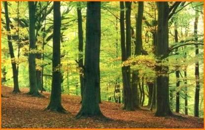bosque04