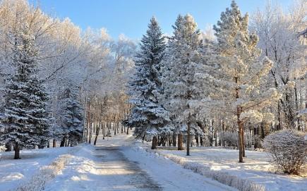 seasons-winter-roads-snow-trees-fir-forest-roads-wallpaper-153438