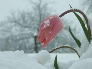 fotos-de-flores-en-invierno-belleza1