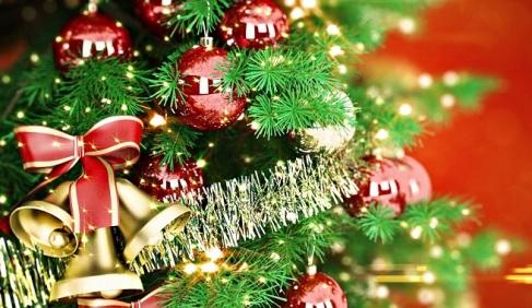 por-que-escoger-un-arbol-de-navidad-natural