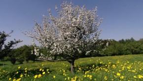 árbol-esco-ok-696x400