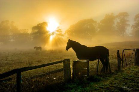 9201619_horse2