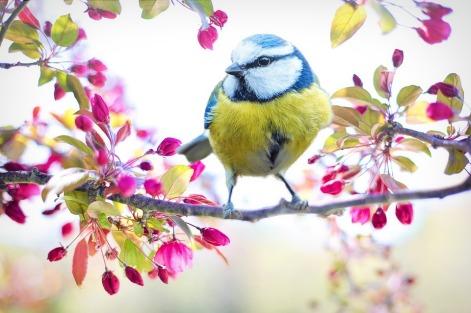 spring-bird-2295434_960_720