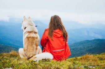 aventura-con-perros