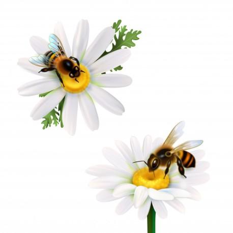 miel-abejas-sentado-flores-margarita_1284-20697