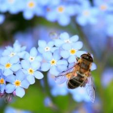sos-polinizadores-bee-abejas-abejorros-flores (15)